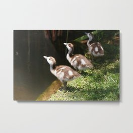 Three Little Ducklings Metal Print