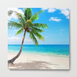 palm tree by the beach Metal Print