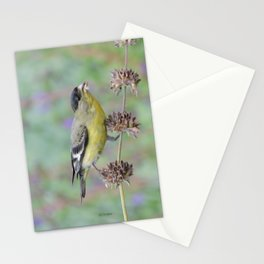 Lesser Goldfinch Snacks on Seeds Stationery Cards