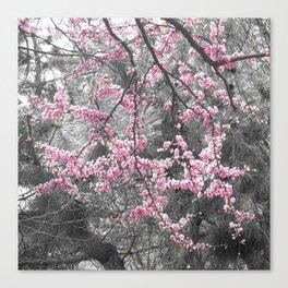 Under The Redbud Tree Canvas Print