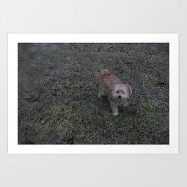 Snowy Puppy Paws, Ft. Lily - Silverdale, Washington Art Print