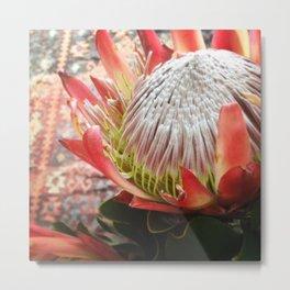 #150Photo #164 #Protea #RSA #NationalFlower #Fynbos Metal Print