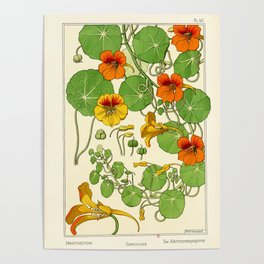 French botanical flower plate - Maurice Verneuil - Capucine Poster