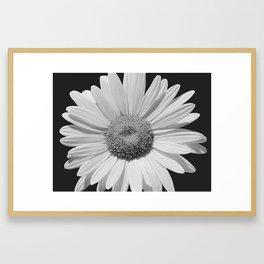 Black & White Daisy Contemporary Flower Modern Cottage A494 Framed Art Print