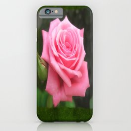 Pink Roses in Anzures 4 Blank P1F0 iPhone Case