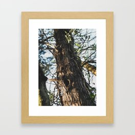 Tree - Nature Photography Framed Art Print