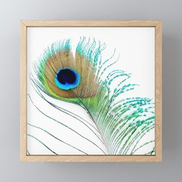 Peacock - Peacock Feather - Peacock Tail Feather Framed Mini Art Print