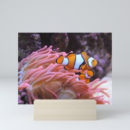 Clownfish and son Swimming near an Anemone Mini Art Print