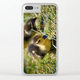 Curious - Colorful Clear iPhone Case