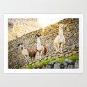 Llamas at Machu Picchu by sidecarphoto