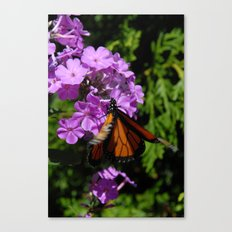 Fluttering By Canvas Print