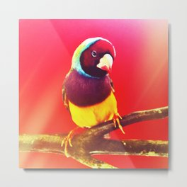 Flirting Lady Gouldian Finch Metal Print