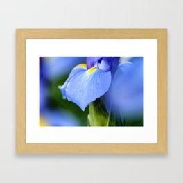 Dwarf Iris Framed Art Print