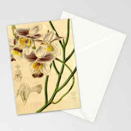 Papilionanthe teres (as syn. Vanda teres) Stationery Cards