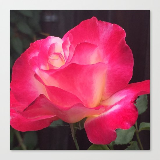 Grandma's Beautiful Rose Untouched Canvas Print