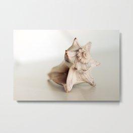 Seashell Still Life Metal Print