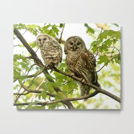 Barred owl mother and child Metal Print