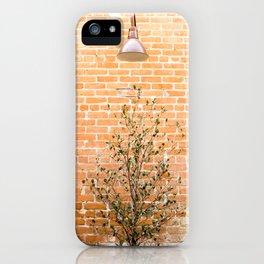 Street photography lamp & tree I iPhone Case