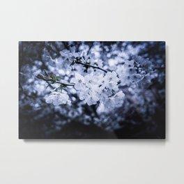 Beautiful White Blossom Metal Print
