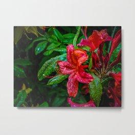 Red Flower. Metal Print