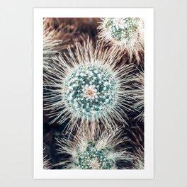 Cactus Study #1 Art Print