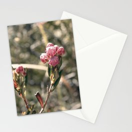 Blossom Burst Stationery Cards