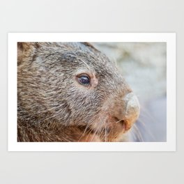 Pensive Wombat Art Print