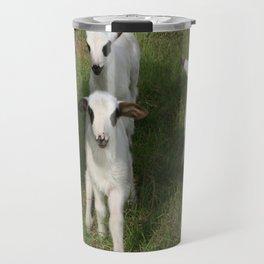 Ewe and Three Lambs Making Eye Contact Travel Mug