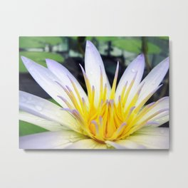 Amazon Waterlily 2 Metal Print