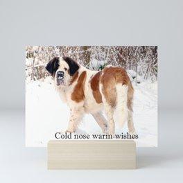 Snow sniffing St Bernard dog Mini Art Print