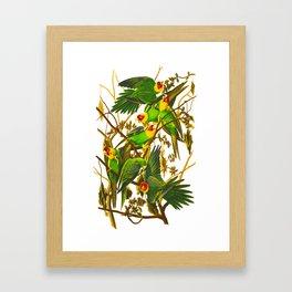 Carolina Parrot Framed Art Print