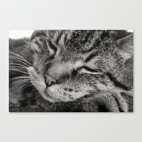 tigger Canvas Prints featuring Tigger by Anchors of Hope Photography