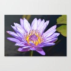 Aquatic Beauty Canvas Print
