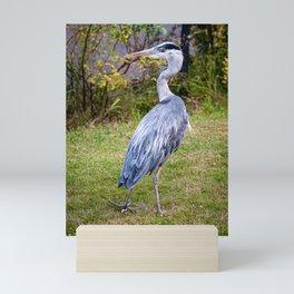 Heron on Patrol Mini Art Print