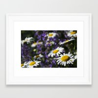 rileigh smirl Framed Art Prints featuring Field of Daisies by Rileigh Smirl
