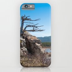 Windswept tree Slim Case iPhone 6s