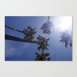 Palm Trees & Sunbeams Canvas Print