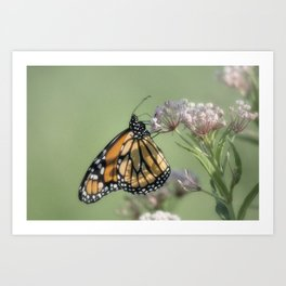 Monarch Butterfly XXI Art Print
