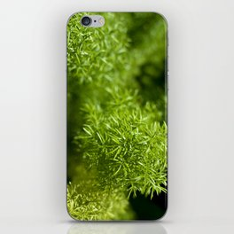 Prickly iPhone Skin