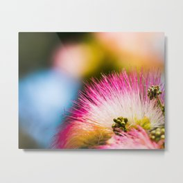 Exotic summer pink silk tree mimosa Metal Print