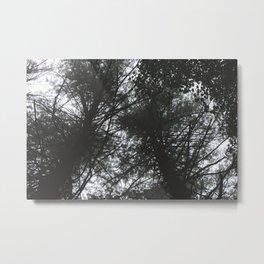 Forest Trail XXXVIII Metal Print