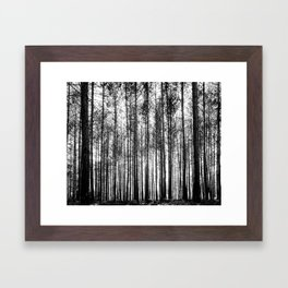 trees in forest landscape - black and white nature photography Framed Art Print