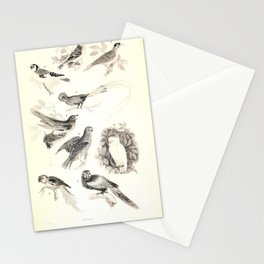005 Lesser Redpole Goldfinch Great Honey Guide Cuckoo Ouzel Parrot Red and blue Maccaw Cockatoo Alexandrine Parrakeet9 Stationery Cards