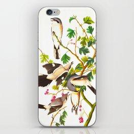 Great Cinereous Shrike, or Butcher Bird iPhone Skin