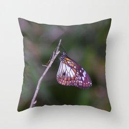 Swamp Tiger (Danaus affinis) Throw Pillow