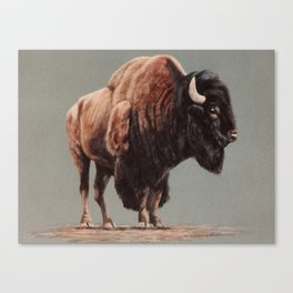 American Bison painting Canvas Print