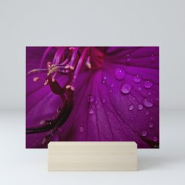 Royal Princess flower macro with water droplets - Floral Photography #Society6 Mini Art Print