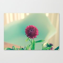 Pink Strawflower and Eames Chair Canvas Print