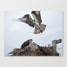 Osprey Nest Canvas Print