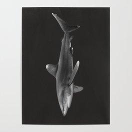 Oceanic Whitetip Shark 2 Poster